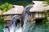 Thumb_intercontinental-moorea-bungalow-dolphins
