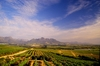 Thumb_vineyards-with-simonsberg