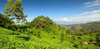 Preview_tea_plantation__haputale__sri_lanka