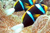 Thumb_diving