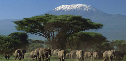 Preview_amboseli-1