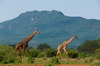 Thumb_tsavo_east_national_park_014