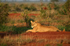 Thumb_tsavo_east_national_park_006