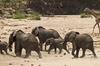 Thumb_elephant_herd