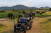 Thumb_minneriya_-_jeep_safari