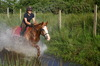 Thumb_farm_-_horse_riding