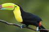 Thumb_central-america-custom-costa-rica-1-toucan