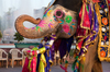 Thumb_elephant-jaipur-india