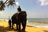 Thumb_7_mildred_the_elephant_at_the_beach
