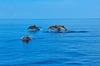 Thumb_39_41892125-h1-angsana_velavaru_dolphin_cruise_9271