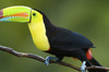 Thumb_large_central-america-custom-costa-rica-1-toucan