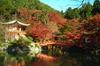 Thumb_daigo-ji_in_autumn__kyoto