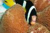 Thumb_30_moofushi-maldives-coral-botanical-garden-1