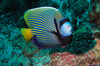 Thumb_moofushi-maldives-diving-4