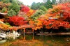 Thumb_japanese_autumn_daigo-ji-temple