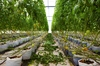 Thumb_21_edr_greenhouse_a_2