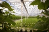Thumb_22_edr_greenhouse_h_2