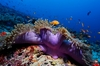 Thumb_bathala_resort_best-snorkeling-maldives-resorts-bathala-resort-coral-reef