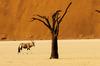 Thumb_rovos_namibia_safari